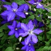 May in the Garden: advice from Glendoick�s Ken Cox