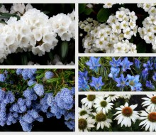Blue and White Garden